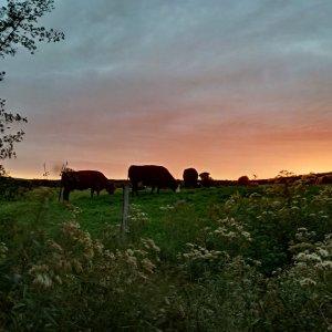 Un coucher de soleil sur la ferme