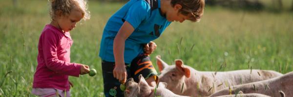 Nélian 10 ans et sa petite soeur Mérély 3 ans qui donnent des pommes aux porc